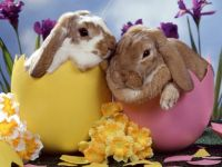 b_200_150_16777215_00_images_article_images_easter_bunnies.jpg
